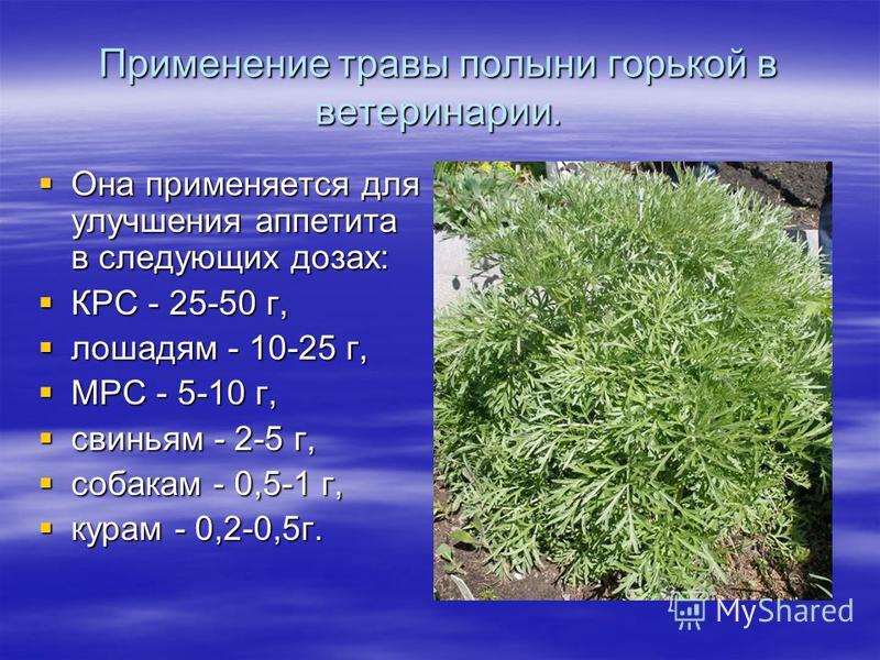 Применение травы полыни горькой в ветеринарии. Она применяется для улучшения аппетита в следующих дозах: Она применяется для улучшения аппетита в следующих дозах: КРС - 25-50 г, КРС - 25-50 г, лошадям - 10-25 г, лошадям - 10-25 г, МРС - 5-10 г, МРС -