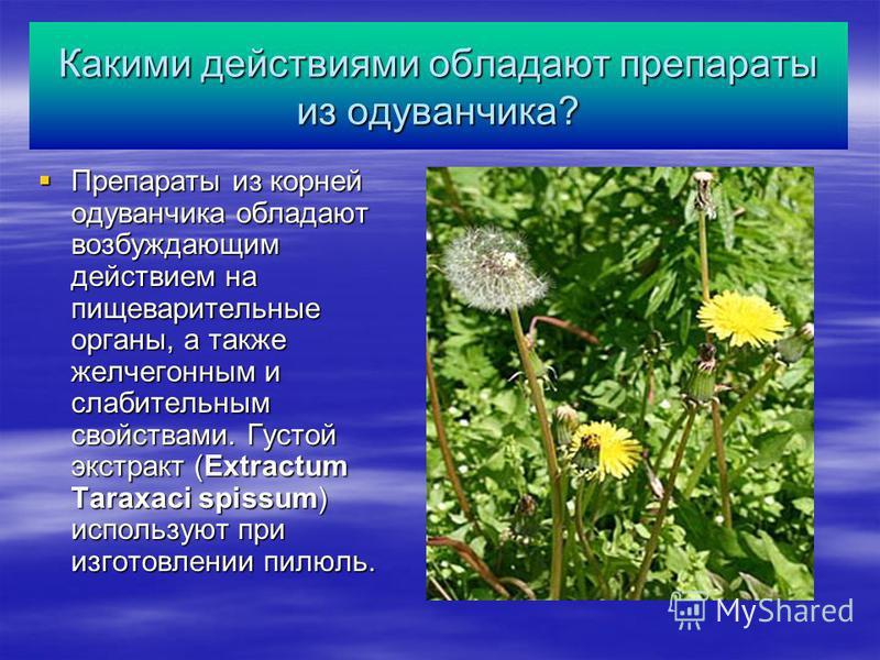 Какими действиями обладают препараты из одуванчика? Препараты из корней одуванчика обладают возбуждающим действием на пищеварительные органы, а также желчегонным и слабительным свойствами. Густой экстракт (Extractum Taraxaci spissum) используют при и