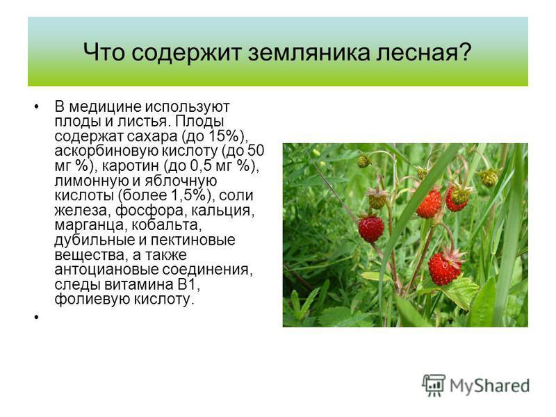 Что содержит земляника лесная? В медицине используют плоды и листья. Плоды содержат сахара (до 15%), аскорбиновую кислоту (до 50 мг %), каротин (до 0,5 мг %), лимонную и яблочную кислоты (более 1,5%), соли железа, фосфора, кальция, марганца, кобальта