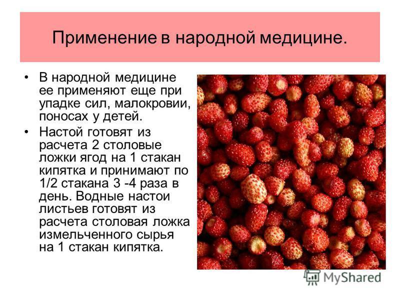 Применение в народной медицине. В народной медицине ее применяют еще при упадке сил, малокровии, поносах у детей. Настой готовят из расчета 2 столовые ложки ягод на 1 стакан кипятка и принимают по 1/2 стакана 3 -4 раза в день. Водные настои листьев г