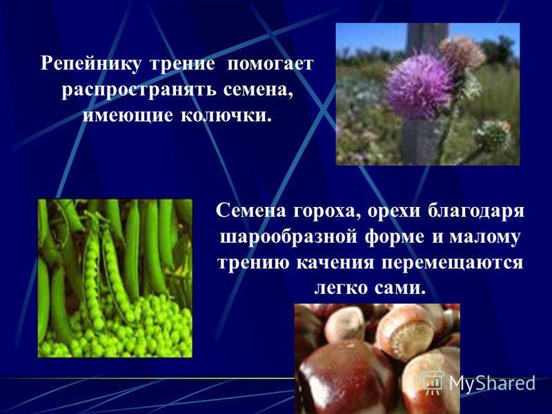 Репейнику трение помогает распространять семена, имеющие колючки. Семена гороха, орехи благодаря шарообразной форме и малому трению качения перемещаются легко сами.