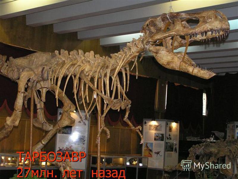 ТАРБОЗАВР 27 млн. лет назад