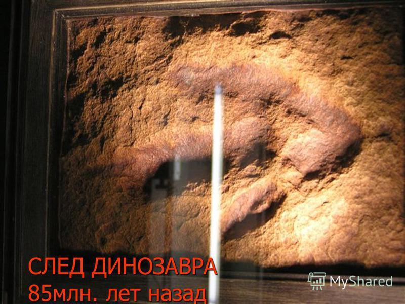 СЛЕД ДИНОЗАВРА 85 млн. лет назад