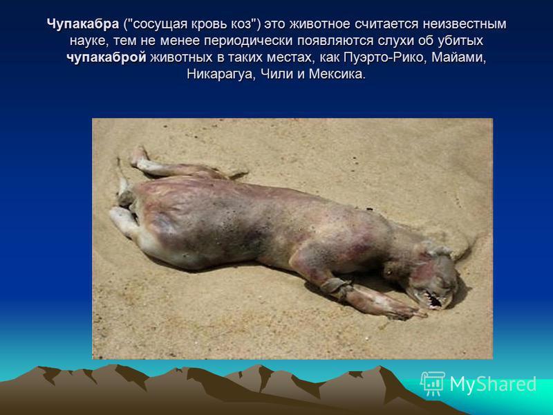 Чупакабра (сосущая кровь коз) это животное считается неизвестным науке, тем не менее периодически появляются слухи об убитых чупакаброй животных в таких местах, как Пуэрто-Рико, Майами, Никарагуа, Чили и Мексика.