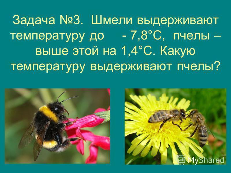 Задача 3. Шмели выдерживают температуру до - 7,8°С, пчелы – выше этой на 1,4°С. Какую температуру выдерживают пчелы?