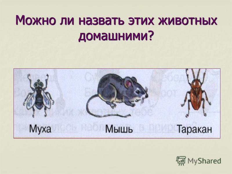 Можно ли назвать этих животных домашними?