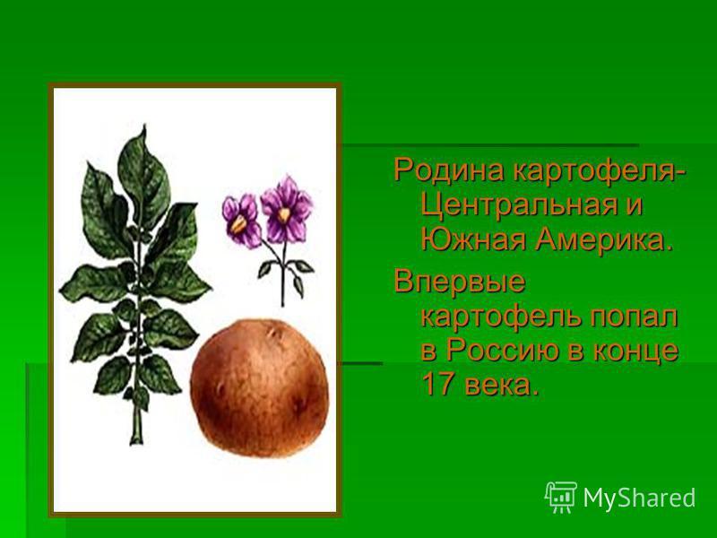 Родина картофеля- Центральная и Южная Америка. Впервые картофель попал в Россию в конце 17 века.