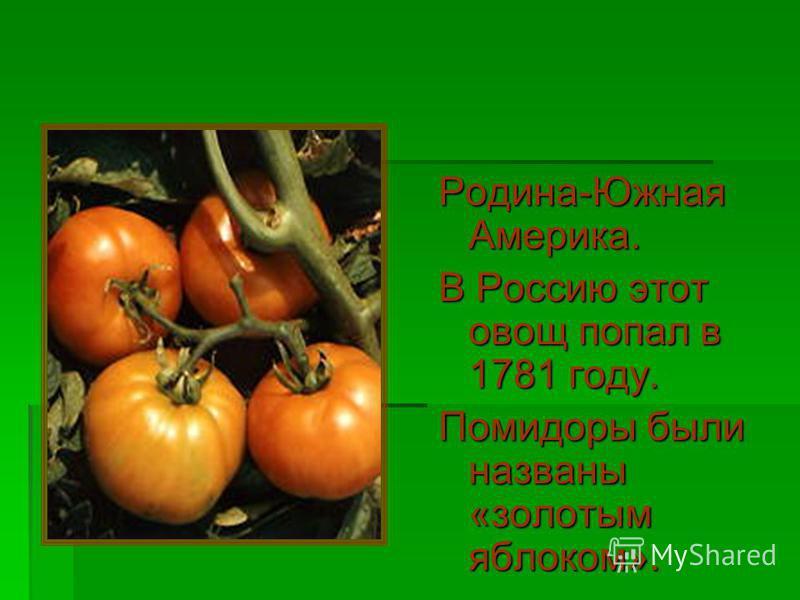 Родина-Южная Америка. В Россию этот овощ попал в 1781 году. Помидоры были названы «золотым яблоком».