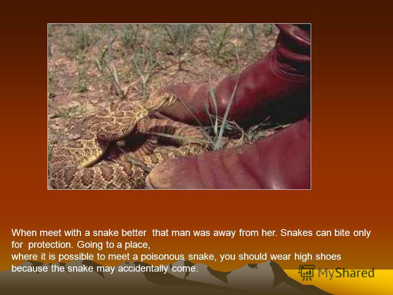 Some snakes are very poisonous, so their bite is dangerous for a man. For example, it cobras and vipers. In a sting of poison snakes out of special tooth. Poison need snakes to kill their prey, and to protect themselves from attack