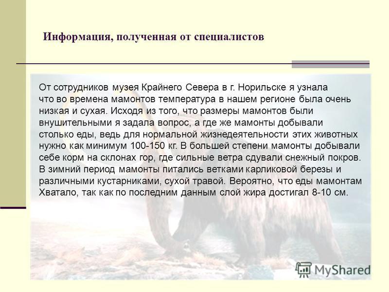 Информация, полученная от специалистов От сотрудников музея Крайнего Севера в г. Норильске я узнала что во времена мамонтов температура в нашем регионе была очень низкая и сухая. Исходя из того, что размеры мамонтов были внушительными я задала вопрос