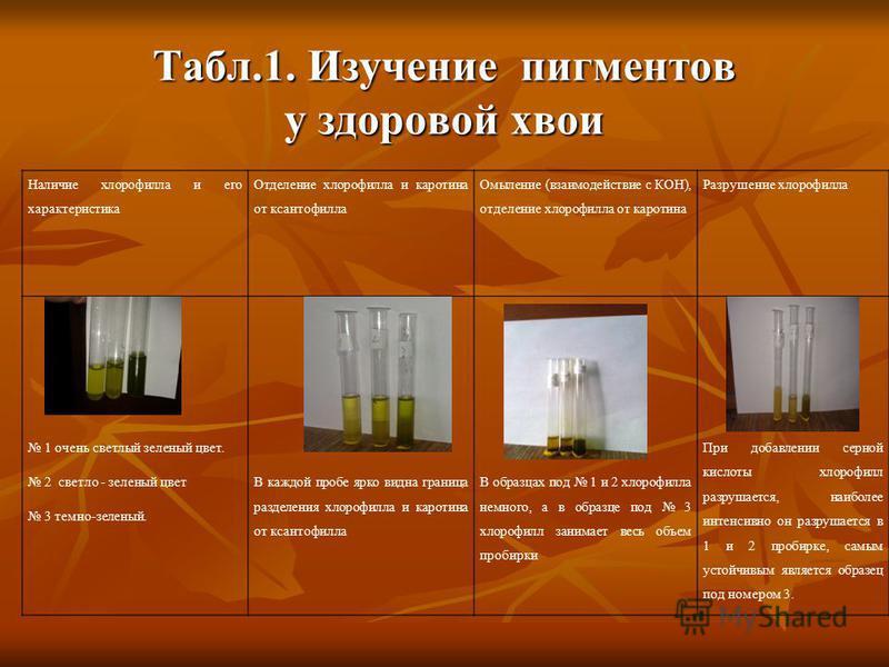 Табл.1. Изучение пигментов у здоровой хвои Наличие хлорофилла и его характеристика Отделение хлорофилла и каротина от ксантофилла Омыление (взаимодействие с КОН), отделение хлорофилла от каротина Разрушение хлорофилла 1 очень светлый зеленый цвет. 2