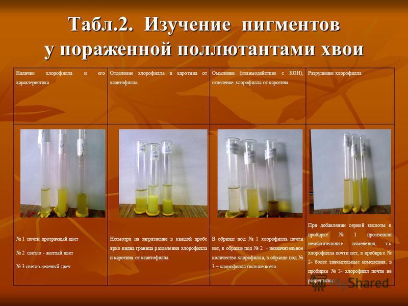 Табл.2. Изучение пигментов у пораженной поллютантами хвои Наличие хлорофилла и его характеристика Отделение хлорофилла и каротина от ксантофилла Омыление (взаимодействие с КОН), отделение хлорофилла от каротина Разрушение хлорофилла 1 почти прозрачны