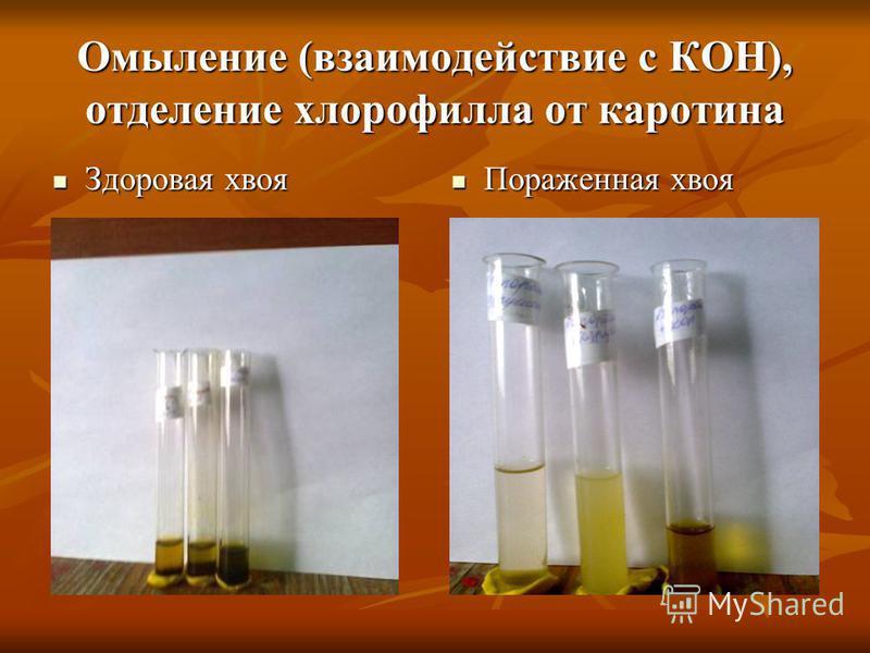 Омыление (взаимодействие с КОН), отделение хлорофилла от каротина Здоровая хвоя Здоровая хвоя Пораженная хвоя Пораженная хвоя