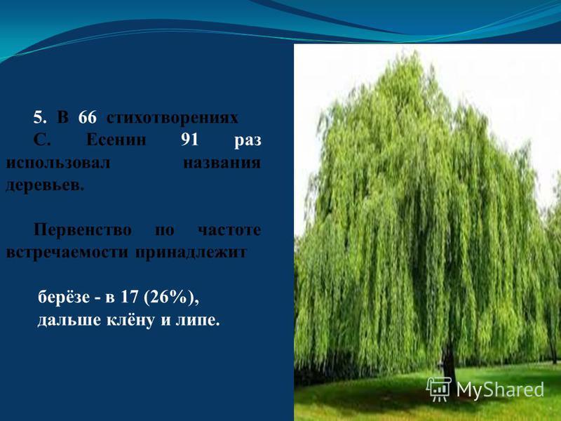 5. В 66 стихотворениях С. Есенин 91 раз использовал названия деревьев. Первенство по частоте встречаемости принадлежит берёзе - в 17 (26%), дальше клёну и липе.