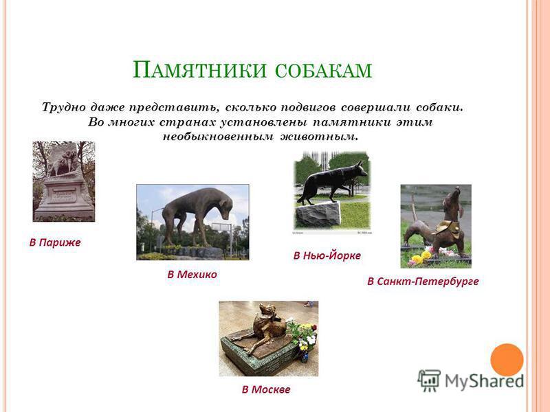П АМЯТНИКИ СОБАКАМ Трудно даже представить, сколько подвигов совершали собаки. Во многих странах установлены памятники этим необыкновенным животным. В Париже В Мехико В Нью-Йорке В Санкт-Петербурге В Москве