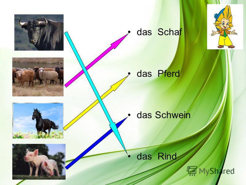 das Schaf das Pferd das Schwein das Rind