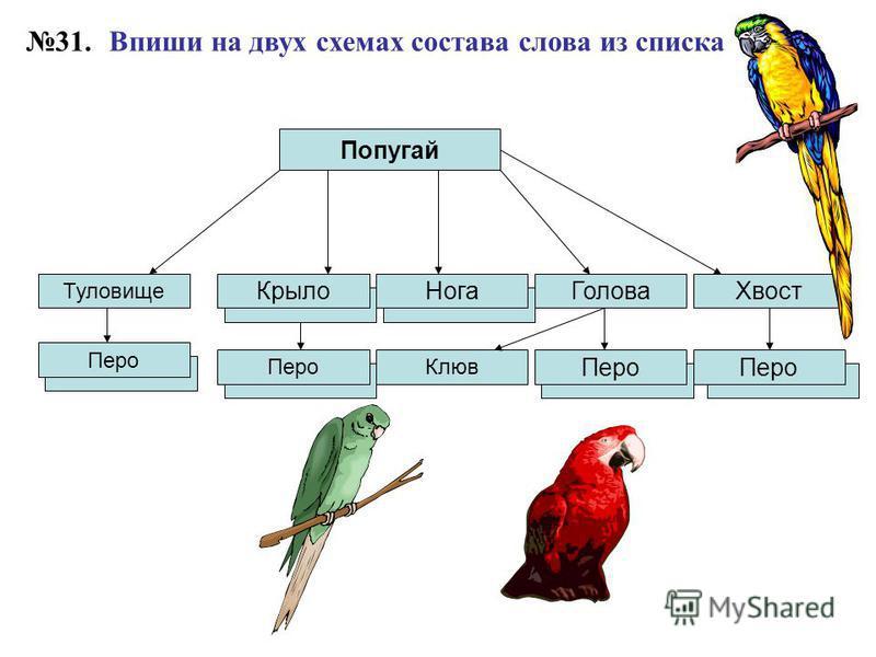 Впиши на двух схемах состава слова из списка Попугай Голова Туловище Крыло 31. Перо Клюв Нога Хвост Перо