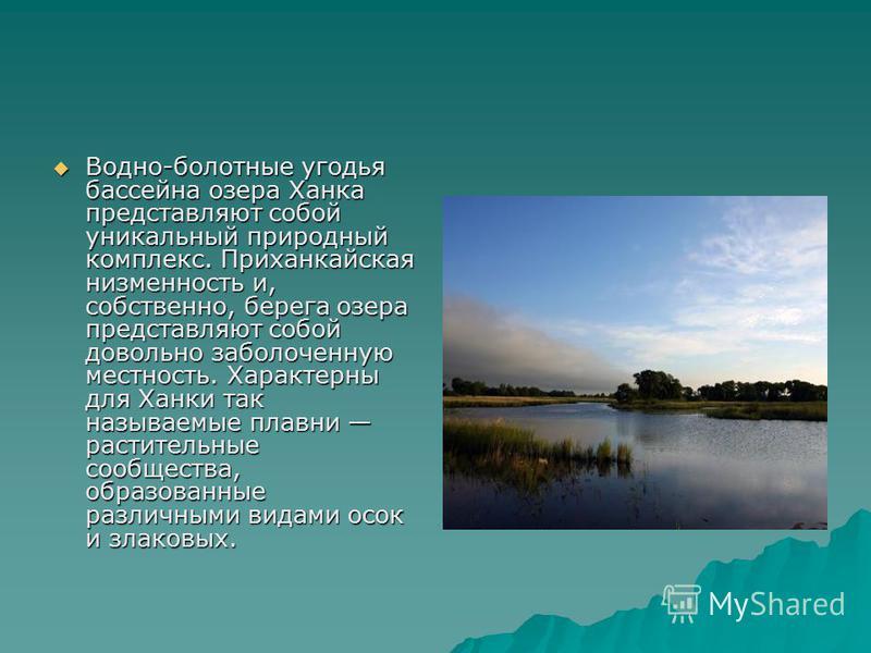 Водно-болотные угодья бассейна озера Ханка представляют собой уникальный природный комплекс. Приханкайская низменность и, собственно, берега озера представляют собой довольно заболоченную местность. Характерны для Ханки так называемые плавни растител