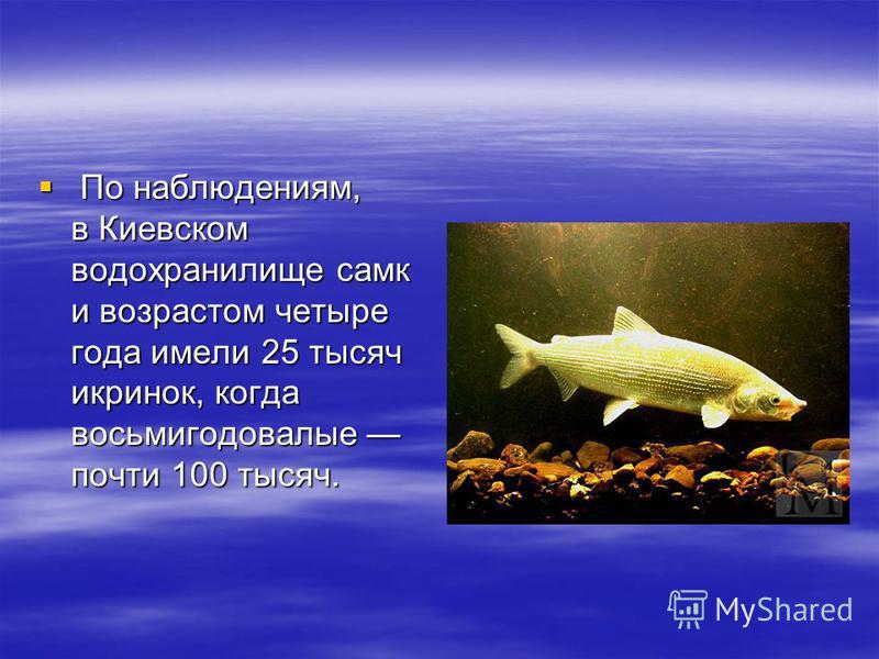 По наблюдениям, в Киевском водохранилище самки возрастом четыре года имели 25 тысяч икринок, когда восьми годовалые почти 100 тысяч. По наблюдениям, в Киевском водохранилище самки возрастом четыре года имели 25 тысяч икринок, когда восьми годовалые п