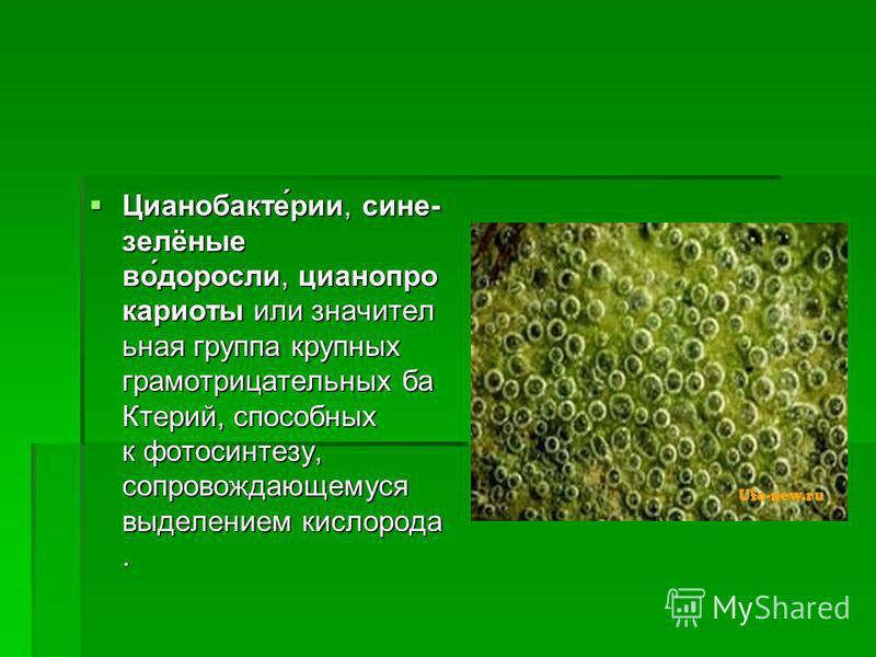 Цианобакте́ричи, сине- зелёные во́доросли, циан прокариоты или значительная группа крупных грамотрицательных ба Ктерий, способных к фотосинтезу, сопровождающемуся выделением кислорода. Цианобакте́ричи, сине- зелёные во́доросли, циан прокариоты или зн
