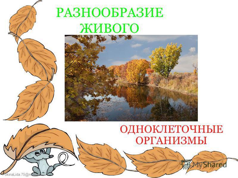 FokinaLida.75@mail.ru РАЗНООБРАЗИЕ ЖИВОГО ОДНОКЛЕТОЧНЫЕ ОРГАНИЗМЫ