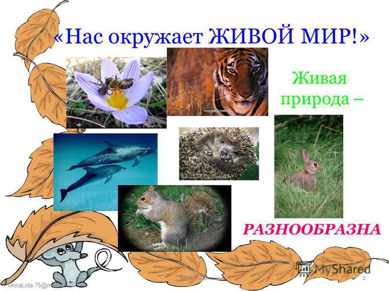FokinaLida.75@mail.ru Буга Ю.В.2 «Нас окружает ЖИВОЙ МИР!» Живая природа – РАЗНООБРАЗНА