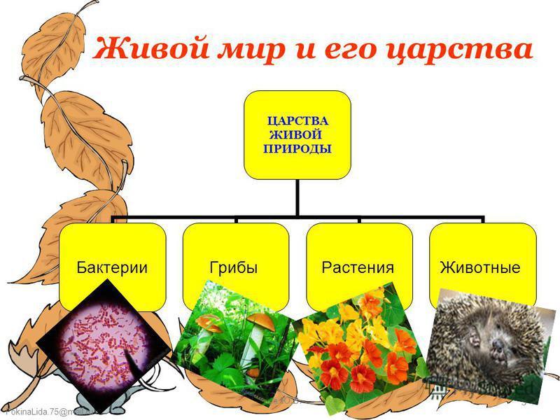 FokinaLida.75@mail.ru Буга Ю.В.3 Живой мир и его царства ЦАРСТВА ЖИВОЙ ПРИРОДЫ Бактерии ГрибыРастения Животные