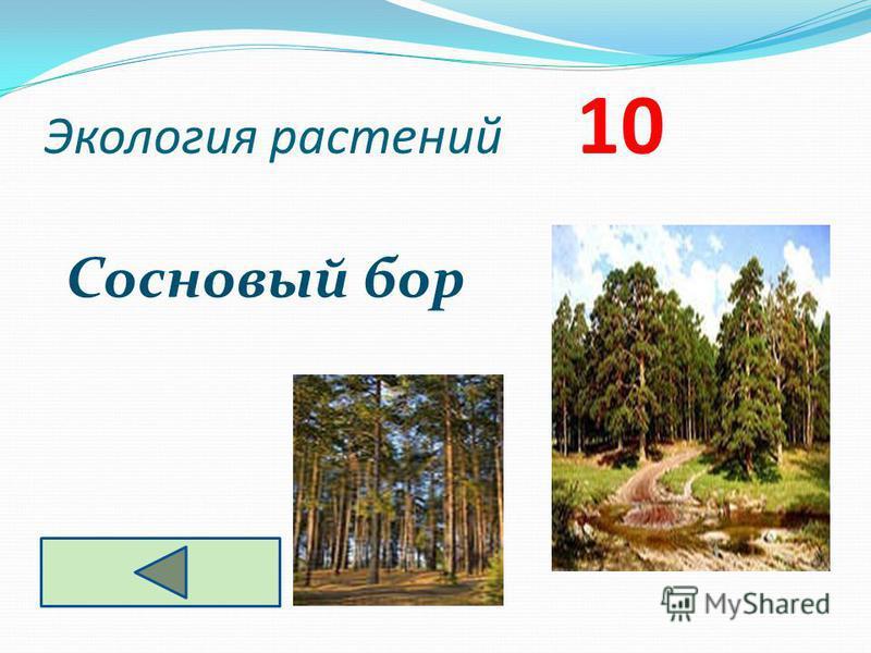 Экология растений 10 Сосновый бор