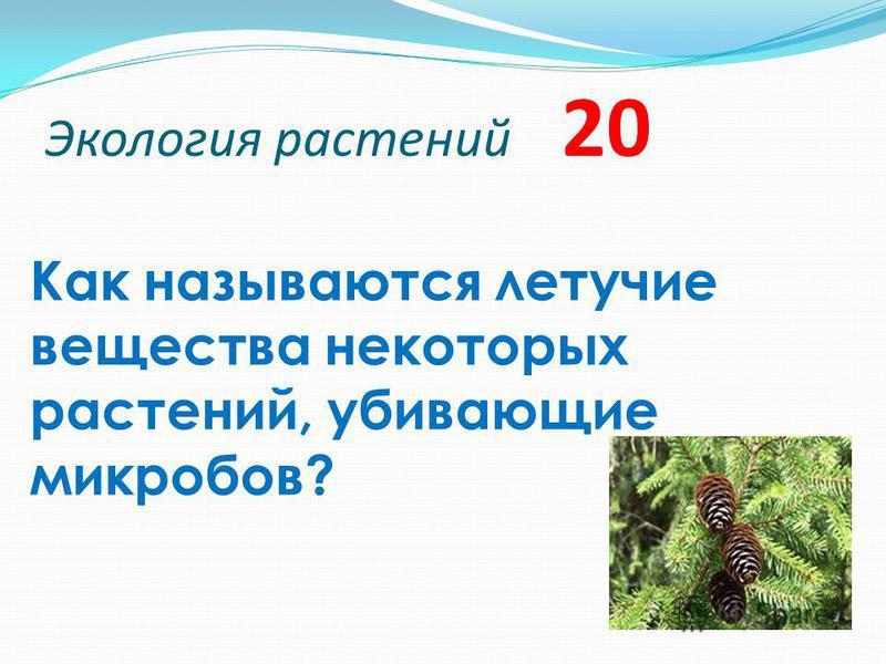 Экология растений 20 Как называются летучие вещества некоторых растений, убивающие микробов?