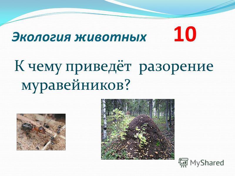 Экология животных 10 К чему приведёт разорение муравейников?