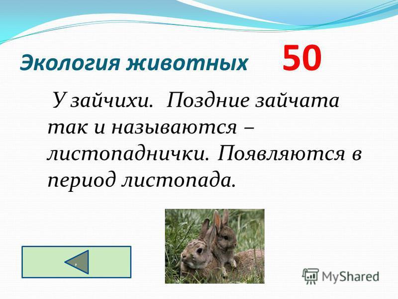 Экология животных 50 У зайчихи. Поздние зайчата так и называются – листопаднички. Появляются в период листопада.,