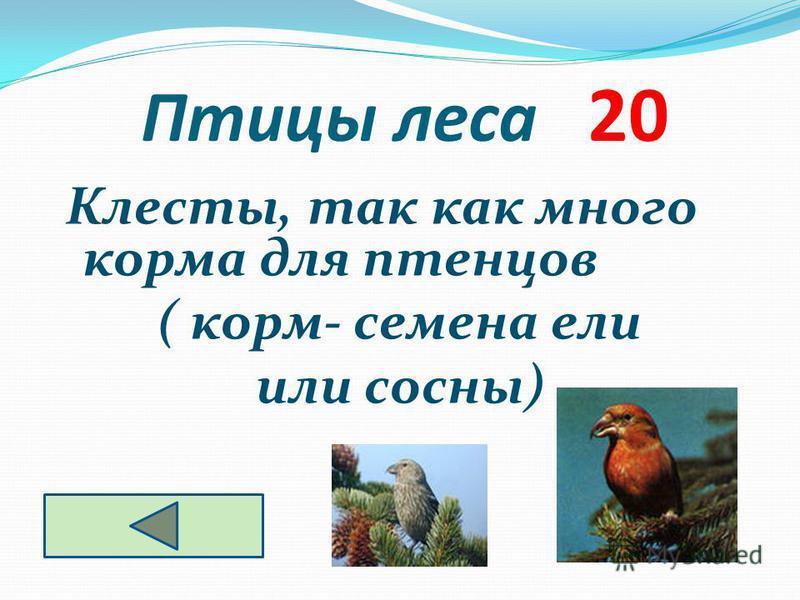 Птицы леса 20 Клесты, так как много корма для птенцов ( корм- семена ели или сосны)