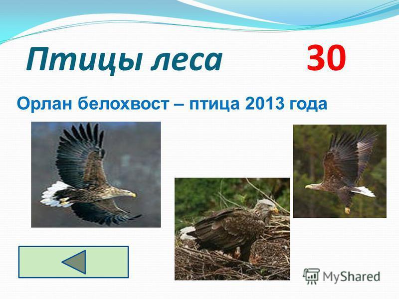 Птицы леса 30 Орлан белохвост – птица 2013 года