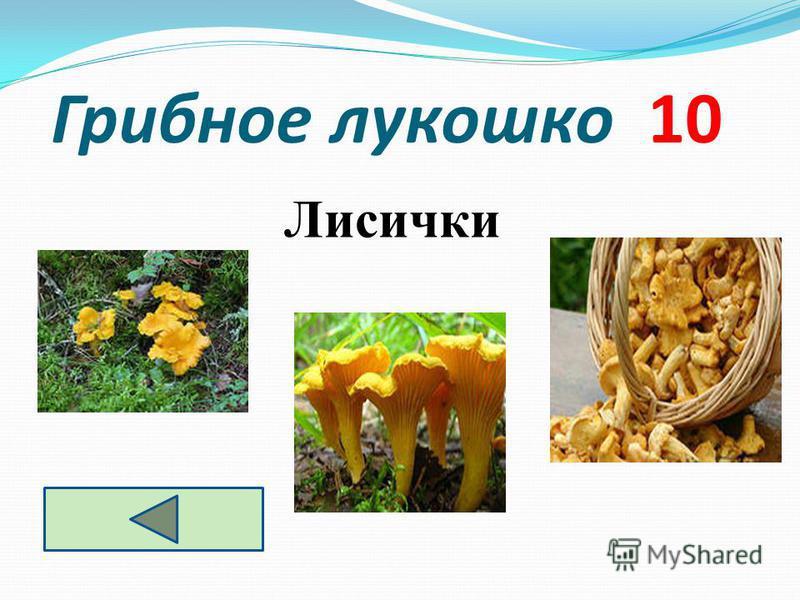 Грибное лукошко 10 Лисички