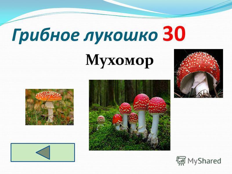 Грибное лукошко 30 Мухомор