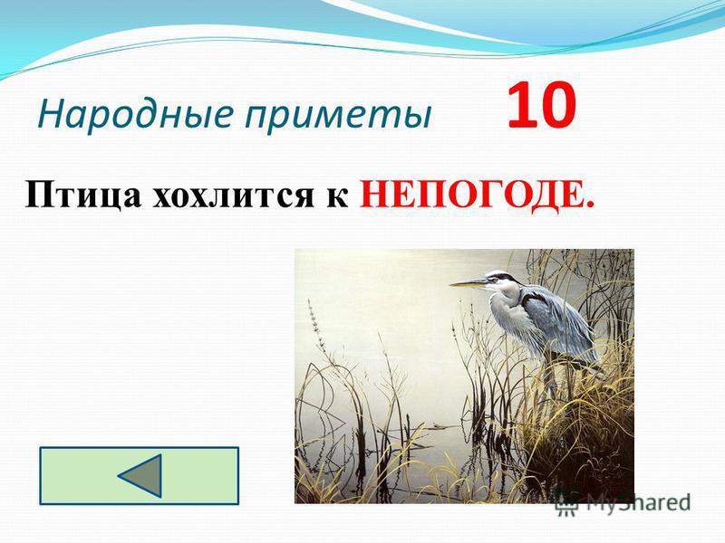 Народные приметы 10 Птица хохлится к НЕПОГОДЕ.