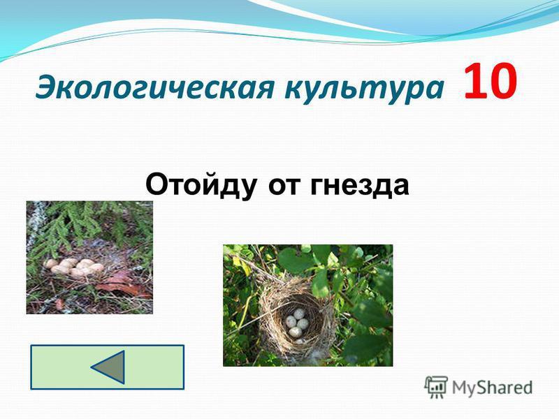 Экологическая культура 10 Отойду от гнезда