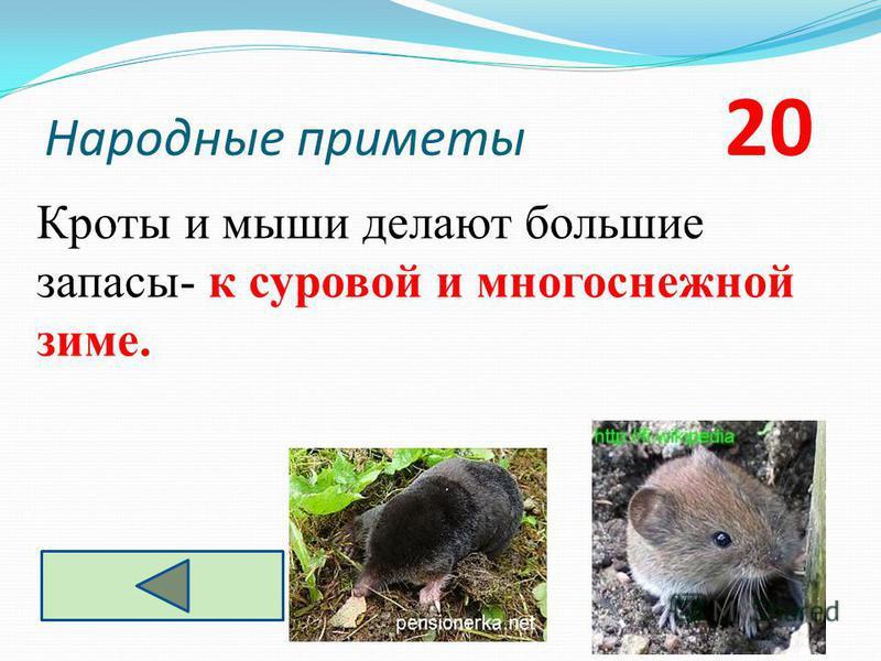 Народные приметы 20 Кроты и мыши делают большие запасы- к суровой и многоснежной зиме.