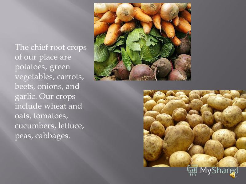 The chief root crops of our place are potatoes, green vegetables, carrots, beets, onions, and garlic. Our crops include wheat and oats, tomatoes, cucumbers, lettuce, peas, cabbages.