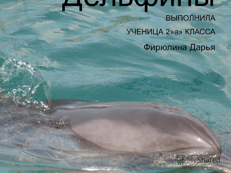 Дельфины ВЫПОЛНИЛА УЧЕНИЦА 2»а» КЛАССА Фирюлина Дарья