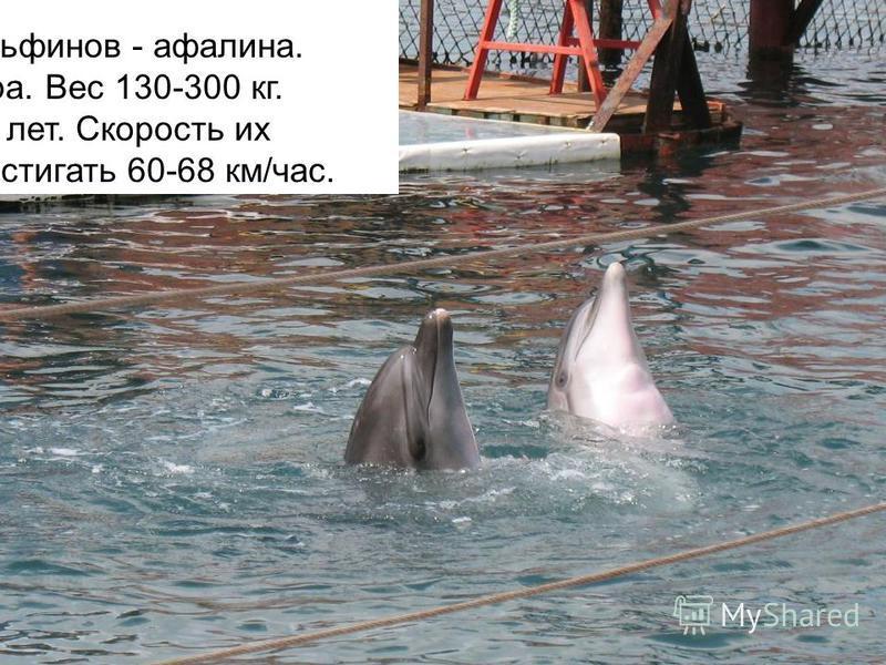 Дельфины являют собой образец высочайшей приспособленности к водной стихии. К передвижению в воде приспособлены гораздо лучше рыб. Передние плавники служат дельфину рулями глубины, поворотов и тормозами. Самый крупный вид дельфинов - афалина. Длина т