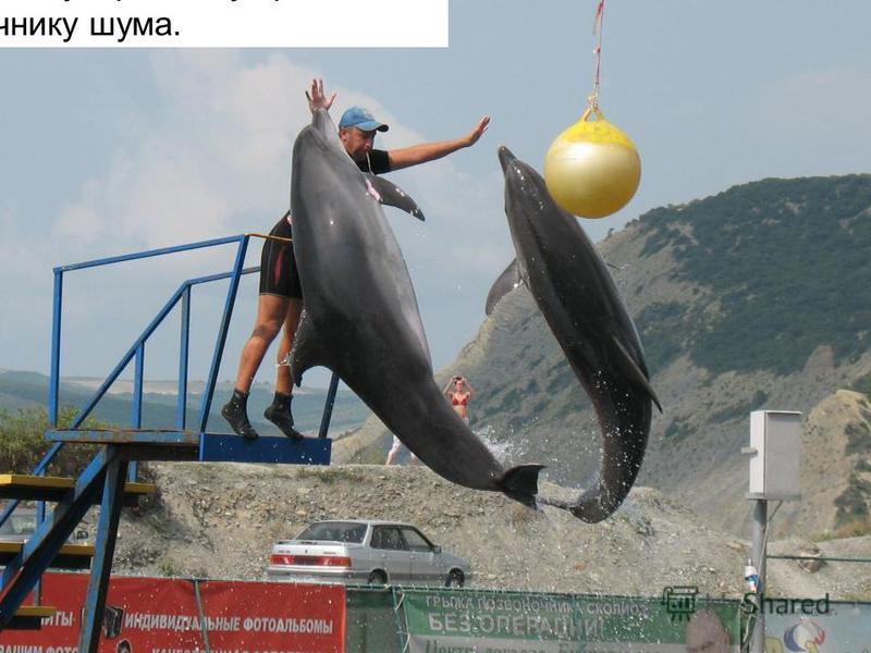 Органов обоняния дельфины не имеют, зато зрение и слух отменные. Даже едва слышимый удар о воду привлекает дельфинов к источнику шума.