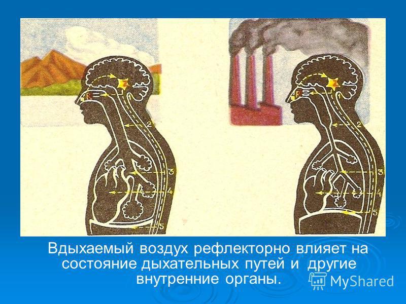 Вдыхаемый воздух рефлекторно влияет на состояние дыхательных путей и другие внутренние органы.