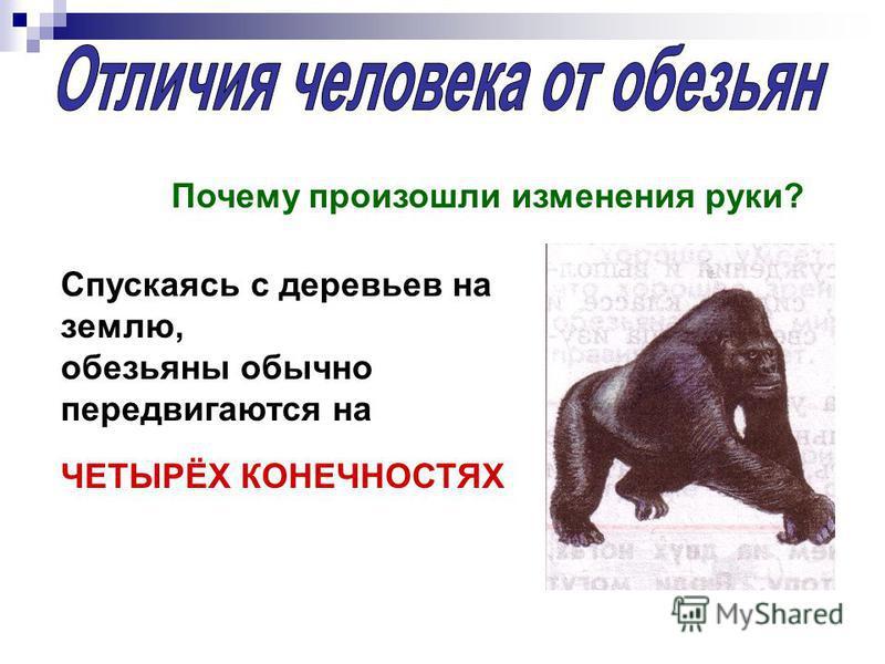 Почему произошли изменения руки? Спускаясь с деревьев на землю, обезьяны обычно передвигаются на ЧЕТЫРЁХ КОНЕЧНОСТЯХ