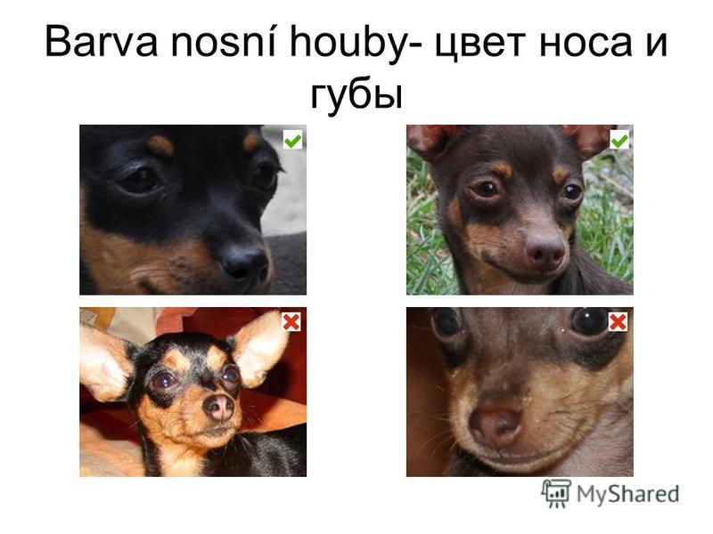 Barva nosní houby- цвет носа и губы