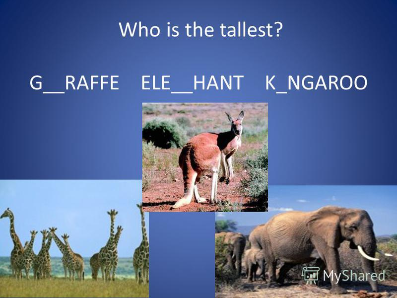Who is the tallest? G__RAFFE ELE__HANT K_NGAROO