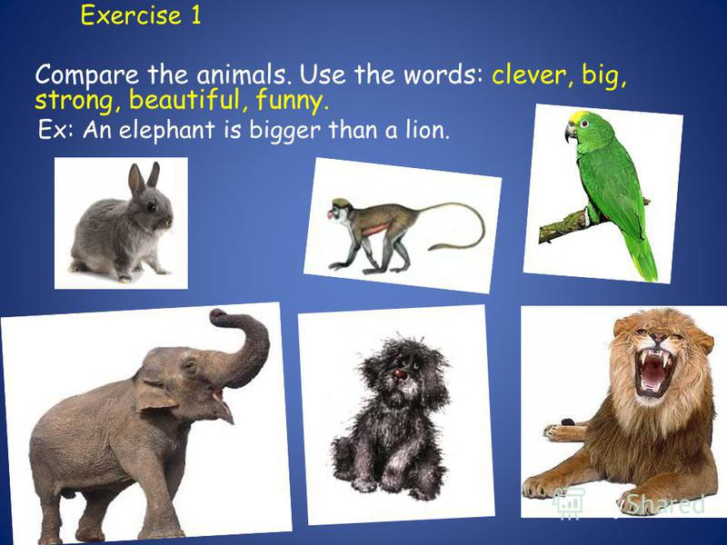 Exercise 1 Compare the animals. Use the words: clever, big, strong, beautiful, funny. Ex: An elephant is bigger than a lion.