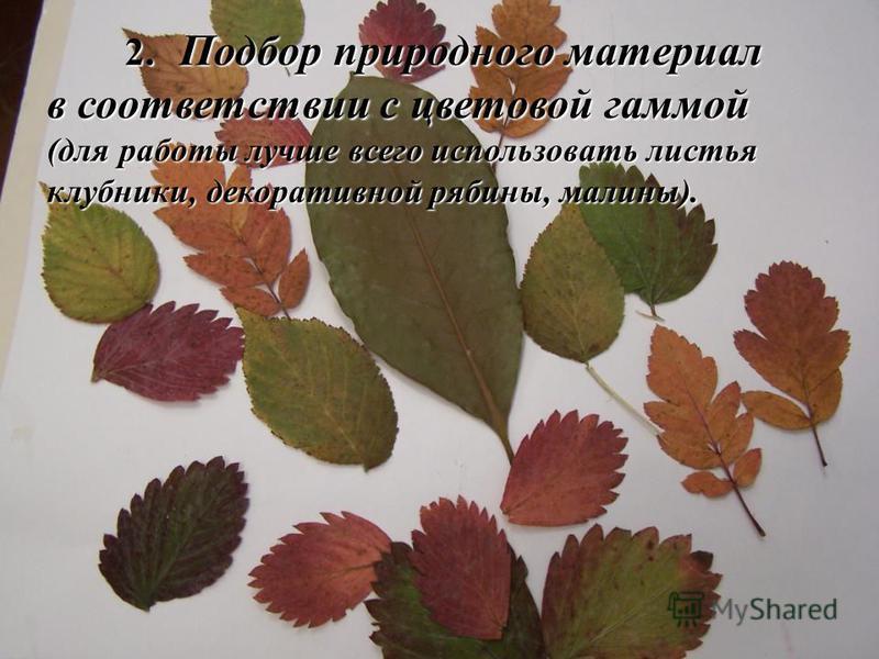 2. Подбор природного материал в соответствии с цветовой гаммой 2. Подбор природного материал в соответствии с цветовой гаммой (для работы лучше всего использовать листья клубники, декоративной рябины, малины).