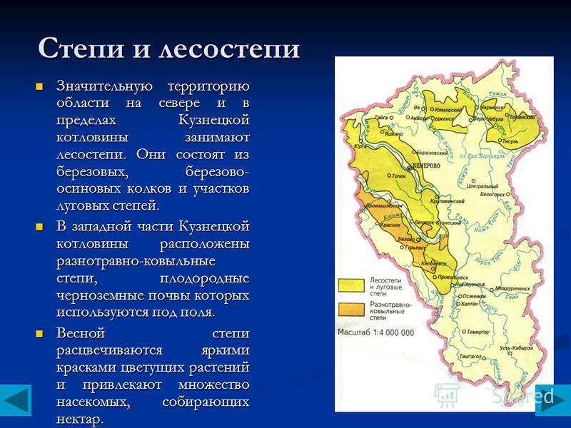 Степи и лесостепи Значительную территорию области на севере и в пределах Кузнецкой котловины занимают лесостепи. Они состоят из березовых, березово- осиновых колков и участков луговых степей. Значительную территорию области на севере и в пределах Куз