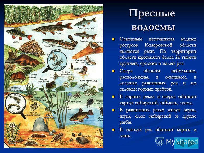 Пресные водоемы Основным источником водных ресурсов Кемеровской области являются реки. По территории области протекают более 21 тысячи крупных, средних и малых рек. Основным источником водных ресурсов Кемеровской области являются реки. По территории